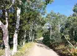bountiful-peak-campground-wasatch-national-forest-11