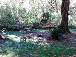 collins-campground-brinnon-wa-10