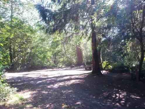 cottonwood-campground-washington-dnr-hoh-7