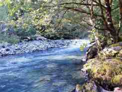 elkhorn-campground-olympic-national-forest-08