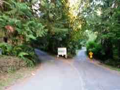 falls-creek-campground-quinault-wa-02