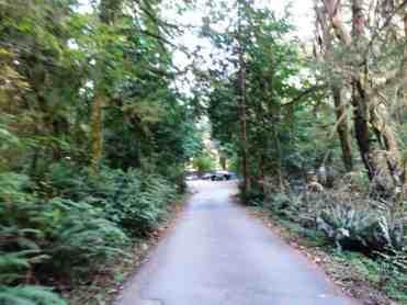 falls-creek-campground-quinault-wa-06