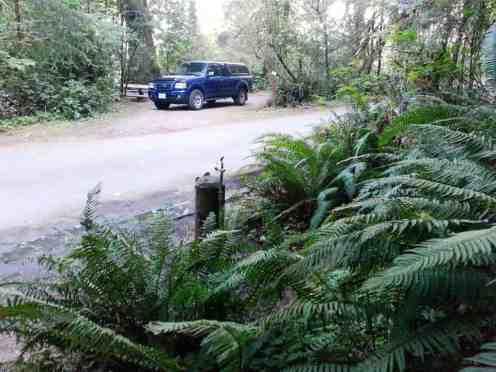 falls-creek-campground-quinault-wa-16