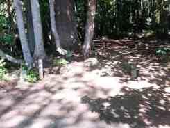 seal-rock-campground-wa06
