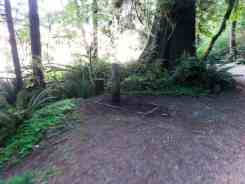 willaby-campground-quinault-wa-10