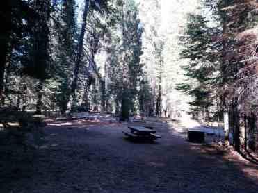 stony-creek-campground-sequoia-09