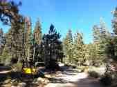 upper-stony-creek-campground-sequoia-2