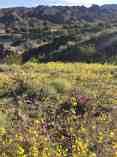 Buckskin Mountain State Park