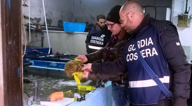 Giugliano, la guardia costiera sequestra cento astici vivi, 30 kg surgelati e 30 kg di datteri allevati abusivamente