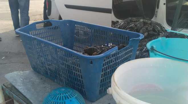 Sequestro di  cozze e frutti di mare a Monterusciello e Licola dei vigili urbani