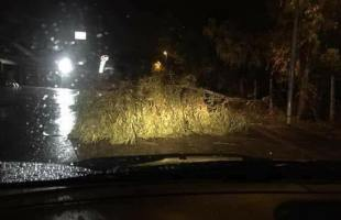 Maltempo, a Licola i primi danni: due alberi caduti nella notte