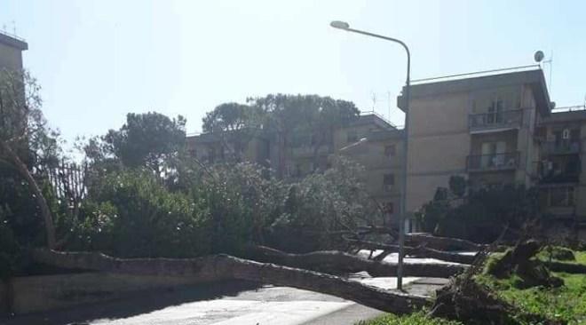 POZZUOLI/Alberi abbattuti: chiuse via Campi Flegrei e via Dalla Chiesa, incendio a Montenuovo