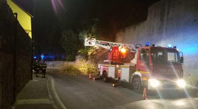 POZZUOLI/ Tragedia sfiorata, grosso albero si abbatte in via Domitiana: strada chiusa al traffico