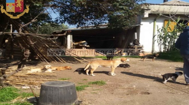 POZZUOLI/ 36 cani tenuti in pessime condizioni igieniche, il comune ordina la sanificazione e che può tenerli solo 10