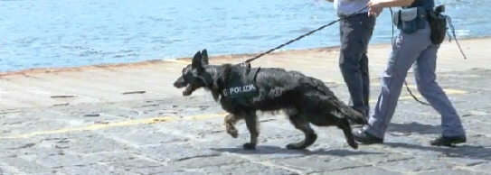 Pusher scoperto dal cane antidroga con 40 spinelli pronti all'uso: arrestato