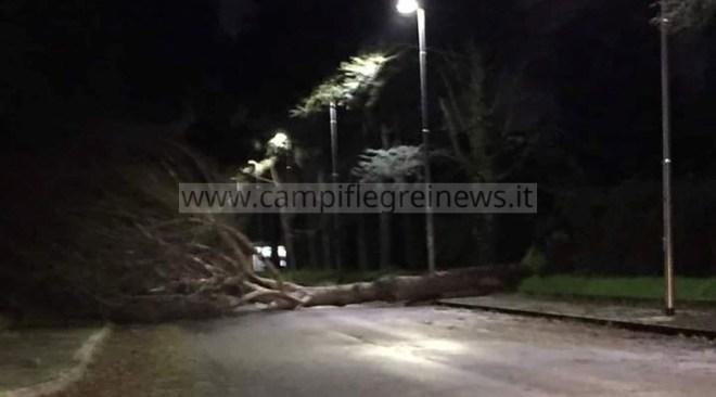 ULTIMORA/ Monterusciello, grosso albero si abbatte sulla carreggiata: stava transitando un auto