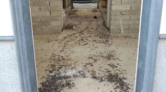 """QUARTO/ """"Cappelle incustodite e escrementi di piccioni per terra nel cimitero, è vergognoso"""""""