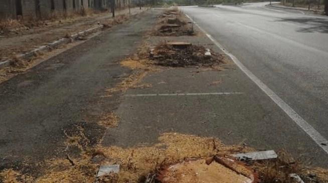 MONTERUSCIELLO/ Devastazione di pini in via De Curtis, ambientalisti e residenti su tutte le furie - LE FOTO