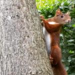 Un écureuil pas timide