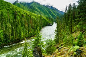 Selway River (ID)
