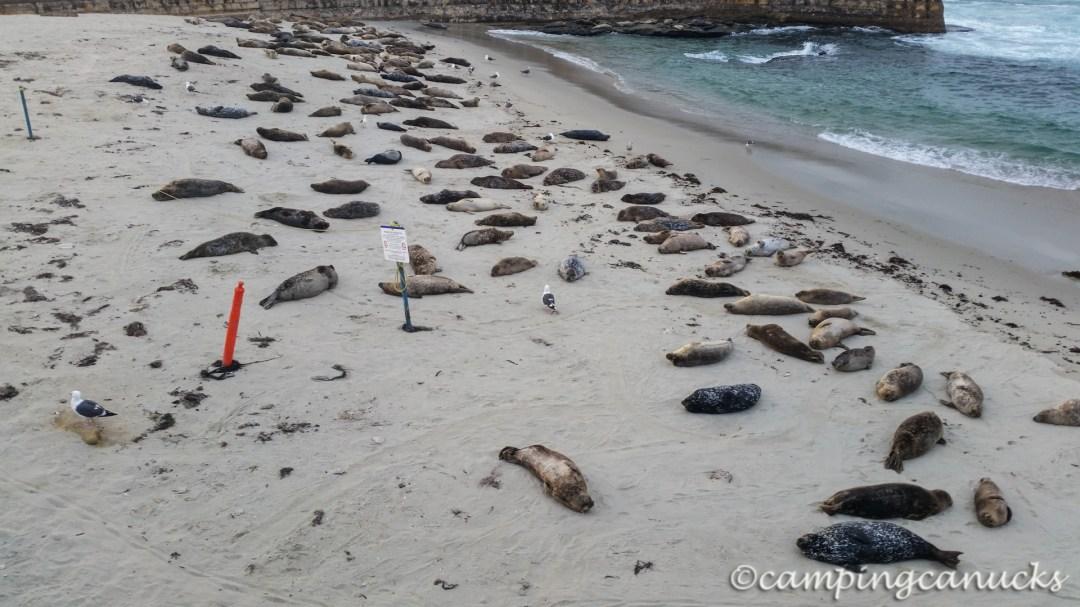 Sea lions lounging around