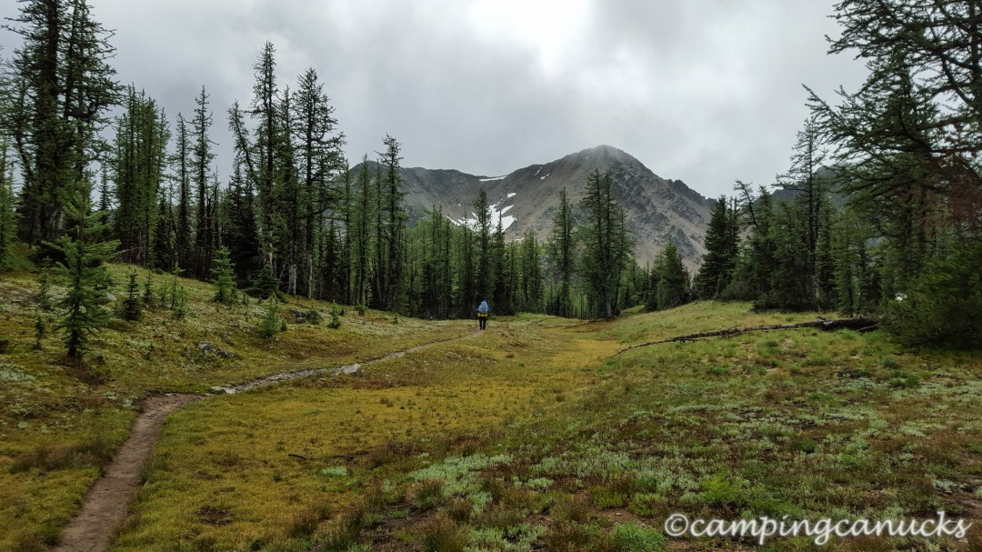 Passing through the sub-alpine larch forest with Frosty in the distance