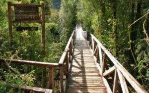 I 5 nuovi Parchi Nazionali: donazioni storiche ampliano il Cile