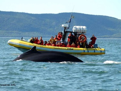 See the whales on zodiac