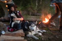 Health and Safety Tips for Camping With Your Dogs 6