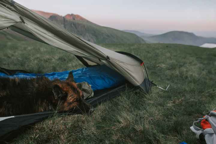 A guide to camping with your dog