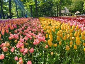 Keufenhof Gardens, The Netherlands
