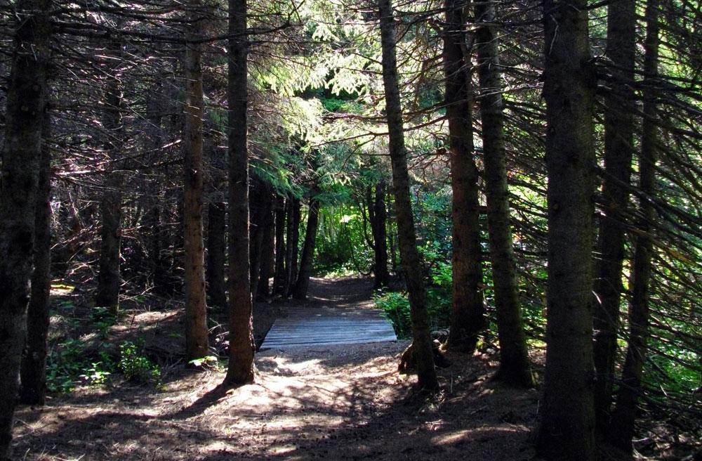 Le sentier du ruisseau des enfants au Camping Griffon
