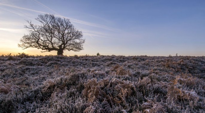 Frosty-Fritham-New-Forest (Shutterstock, Chris Button)