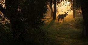 scent elimination deer