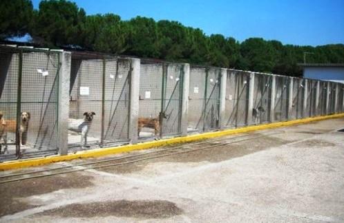 Castelvetrano, Consegnati i lavori di ampliamento del canile municipale