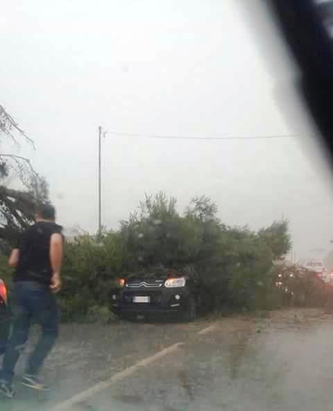 crollo albero 240616