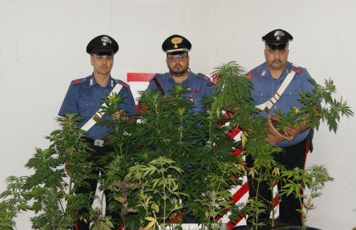[Cc] Salemi, pregiudicato 30enne custodiva 112 piante di marijuana