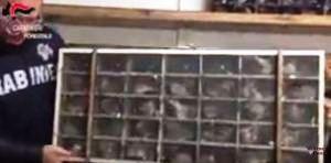 """[OPERAZIONE """"ANELLI INFEDELI""""] Maltrattamento animali: Brescia, i carabinieri fermano due persone che trasportavano illegalmente uccelli vivi [VIDEO]"""