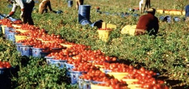 Campobello. Incontro dell'Amministrazione con agricoltori e associazioni del comparto olivicolo per gestire accoglienza migranti stagionali