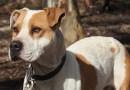 [Maltrattamenti] Annegò il suo cane: Multa di 7mila euro