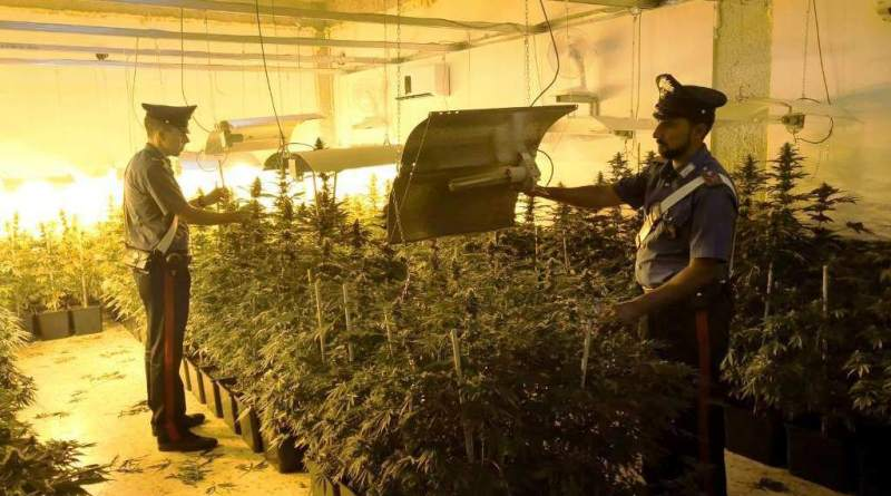 Palermo. I carabinieri scoprono piantagione indoor: arrestato 54enne
