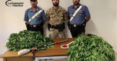 Alcamo. I Carabinieri scoprono piantagione indoor: arrestato un alcamese.