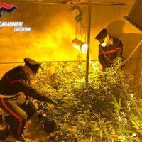 Rinvenuta una serra utilizzata per la coltivazione e confezionamento di marijuana: un arresto.