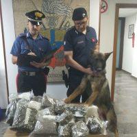 Servizio antidroga arrestate due persone: il cane Ron fiuta anche 4.5 chili di marijuana