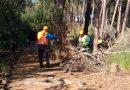 Catania. Ambiente, avviati i lavori di riqualificazione del boschetto della Playa