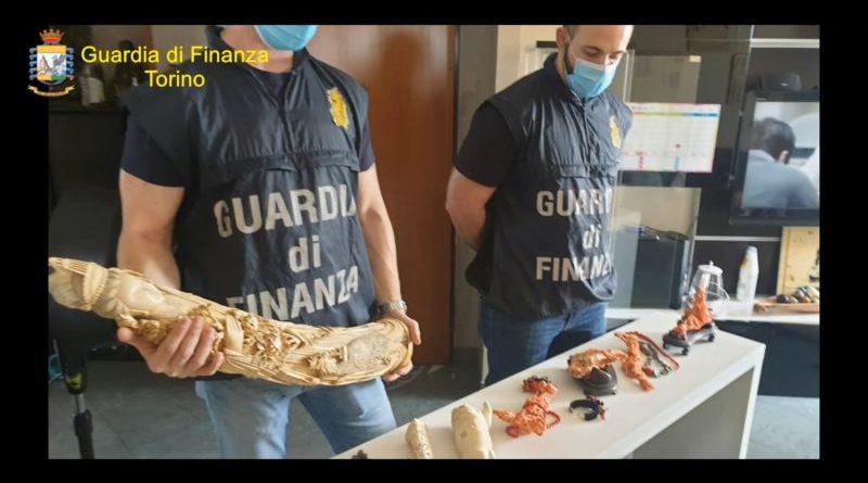 Zanne d'elefante e corallo rosso per creare manufatti destinati al mercato clandestino: denunciata coppia di imprenditori cinesi (Video)