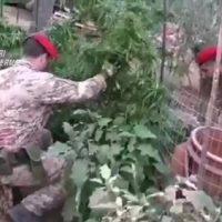 Laboratorio della droga nel palermitano: arrestato 56enne originario di Castelvetrano