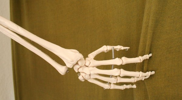 skeleton_hand_stock_1_by_qroot_stock