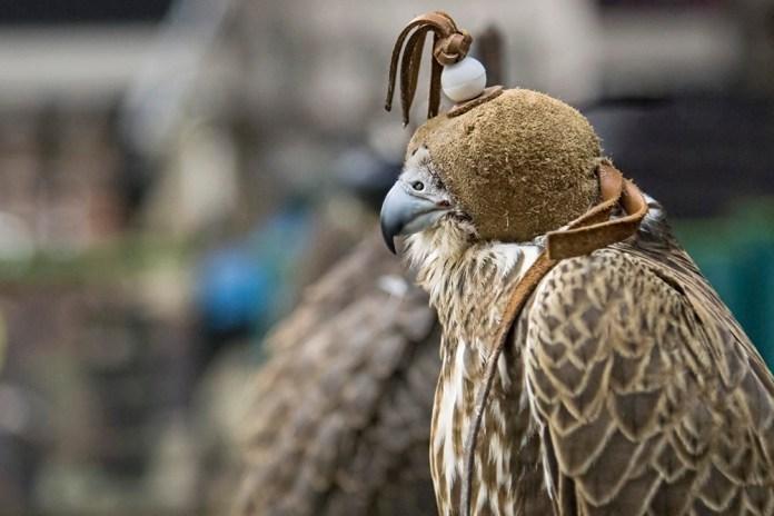 1-falcon-shop_dsc_0517