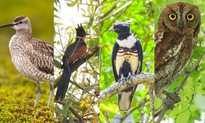 migratory birds SG